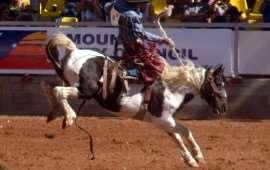 australian-rodeo