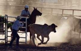 australian-rodeo-4