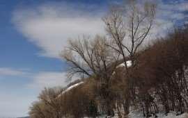 volga-winter