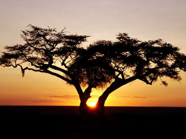 Afrika Fertility_clinics_africa