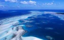 Кораллы Австралии (продолжение)