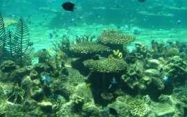 Кораллы австралии