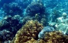Коралловый симбиоз