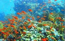 Великолепие кораллового рифа