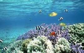 Внешнее влияние на рифы