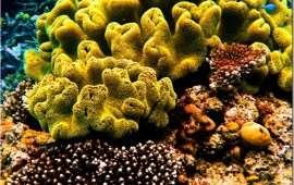 Спасти Большой Барьерный риф