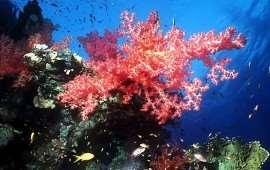 Коралл - фантастическое существо