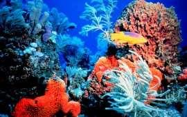"""Насколько рифы """"живучи""""?"""