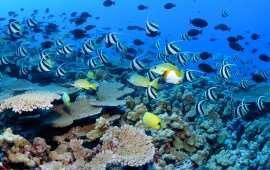 Насколько рифы «живучи»? (ч. 2)