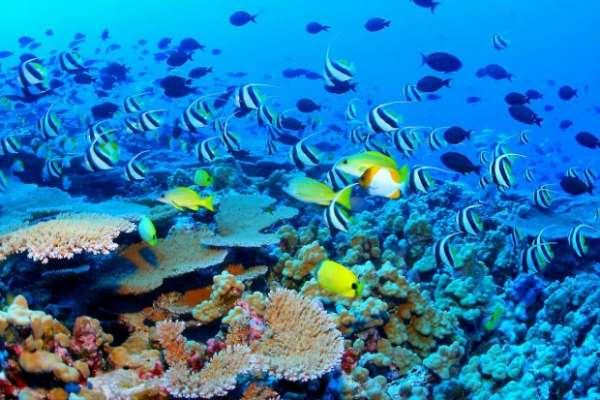 Большой Барьерный риф: все условия для дайвинга