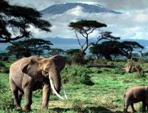 Родина слонов