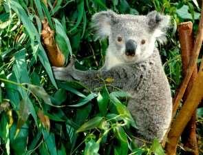 Растительное разнообразие Австралии
