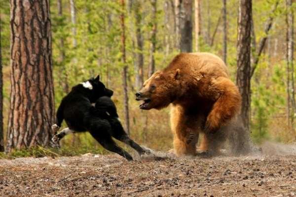 Охота на российских просторах – география путешествий