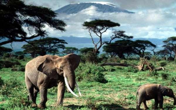 Экзотика Танзании