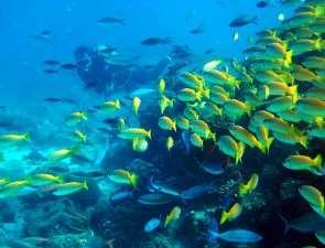 Активный отдых на Маврикии
