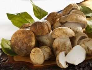 Польза грибов для здоровья человека