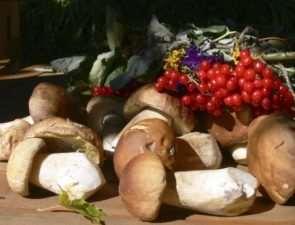 Где можно узнать о фермерских и прочих продуктах, а также рецептах из приготовления