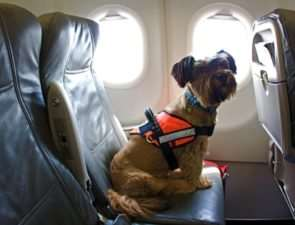 Правила перевозки котов и собак