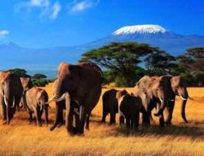 Восхитительные туры в Кению