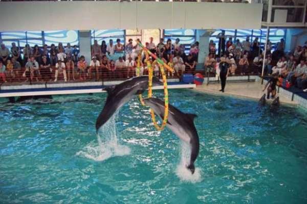Дельфинарий в Геленджике – незабываемый отдых для детей и взрослых