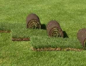 Разновидности и преимущества рулонных газонов