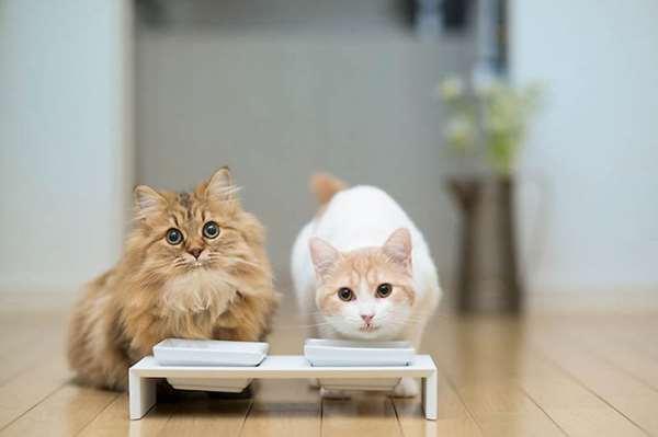 Как выбрать корм для кошки