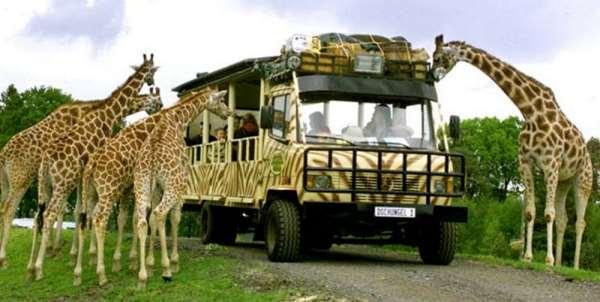 Все о захватывающем сафари в Танзании