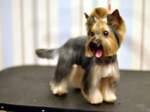 Виды и особенности стрижки собак
