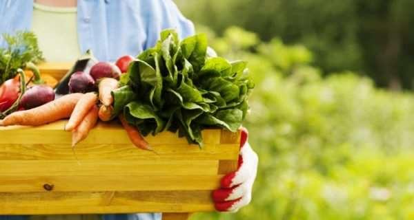 Фермерские продукты – выбор людей, желающих сохранить здоровье