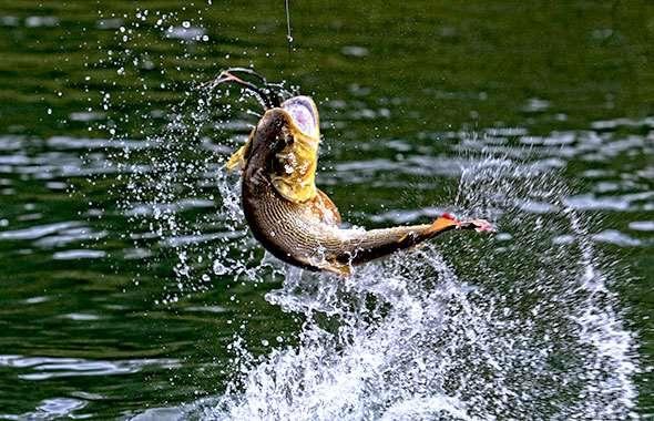 Рыбалка в Карелии дикарем – мечта многих начинающих и опытных рыбаков