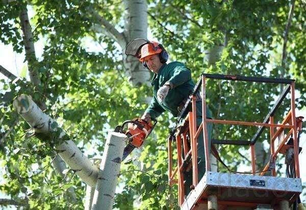 Как быстро и безопасно удалить проблемное дерево на участке