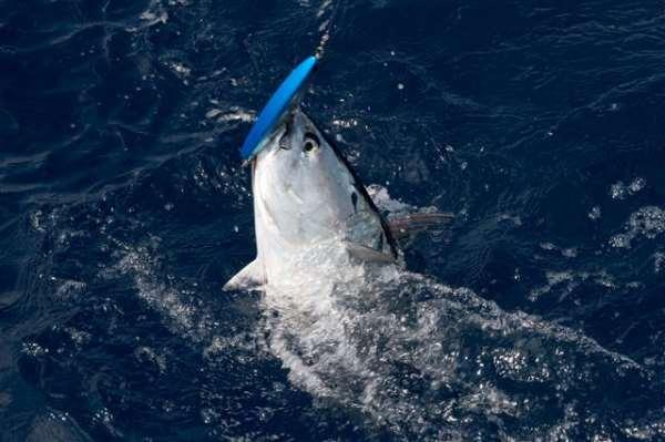 Океаническая рыбалка в Испании