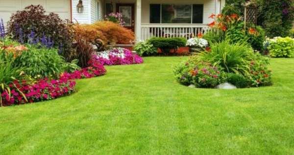 Самостоятельно выращиваем газон – какие правила нужно соблюдать
