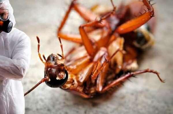 Как проводится профессиональное уничтожение насекомых?