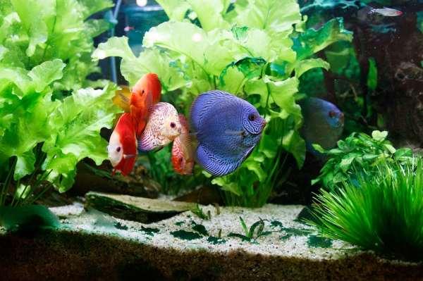Первый запуск аквариума – самый важный шаг