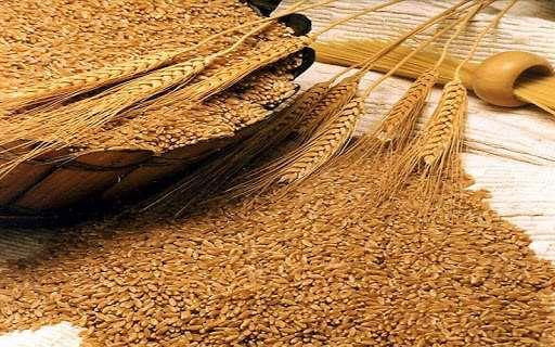 Высококачественная пшеница по доступной стоимости