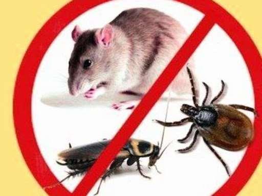 Дезинсекция от насекомых-вредителей и грызунов