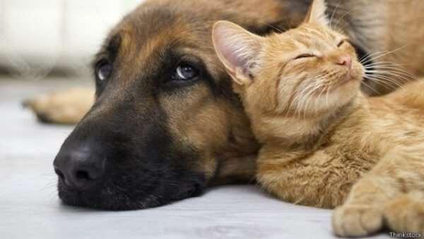 Присмотр за здоровьем домашних животных