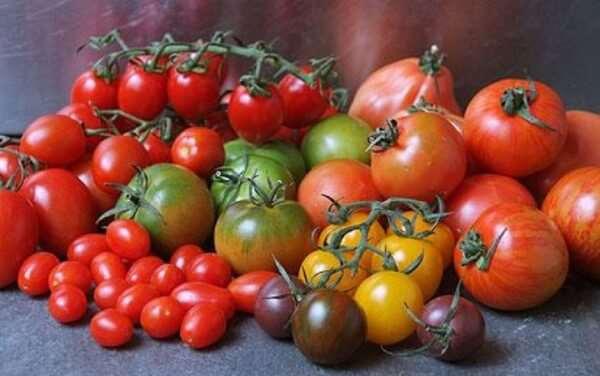 Различные сорта томата по выгодной цене